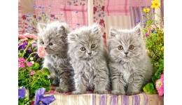 Пазл Касторленд  260 (27491) Три сіреньких кошенятка  32*23 см