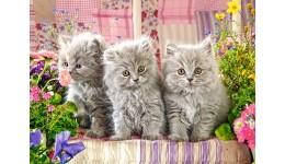 Пазл Касторленд  300 (330) Три сіреньких кошенята  40*29 см