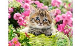 Пазл Касторленд  100 (1039) Кошеня у квітковому саду  40*29 см